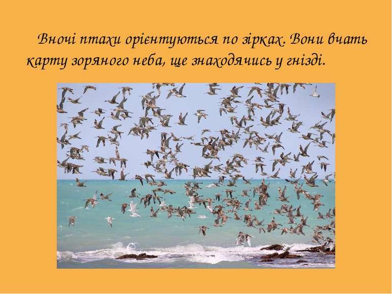 Вночі птахи орієнтуються по зірках. Вони вчать карту зоряного неба, ще знахо...