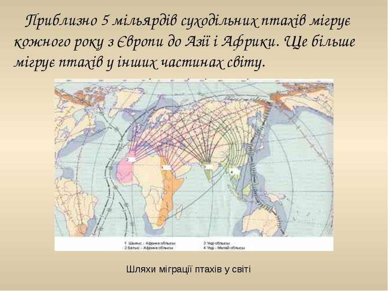 Приблизно 5 мільярдів суходільних птахів мігрує кожного року з Європи до Азії...