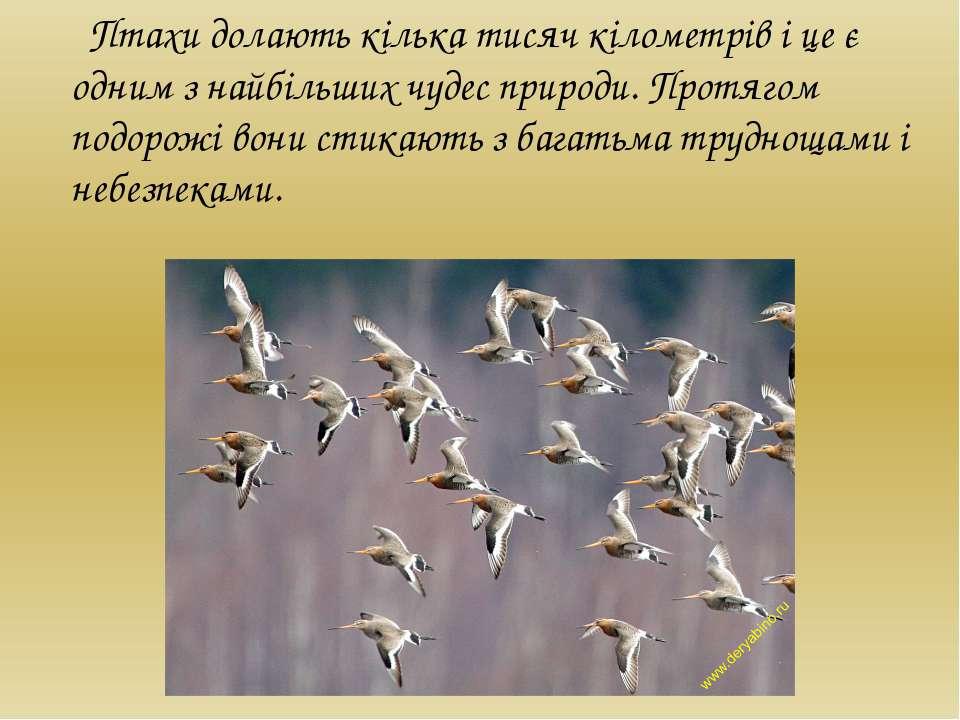 Птахи долають кілька тисяч кілометрів і це є одним з найбільших чудес природи...