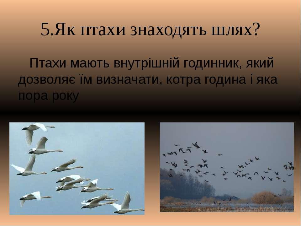 5.Як птахи знаходять шлях? Птахи мають внутрішній годинник, який дозволяє їм ...