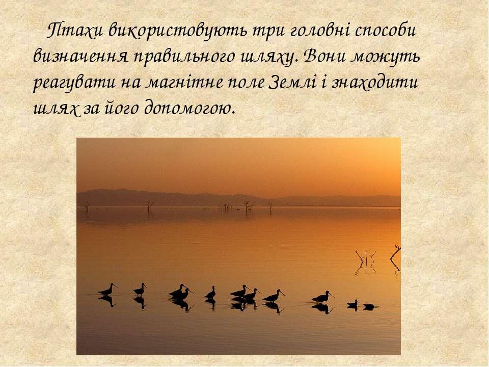 Птахи використовують три головні способи визначення правильного шляху. Вони м...
