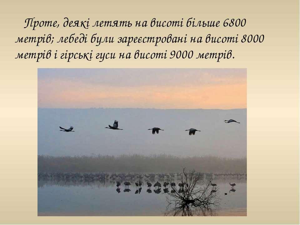 Проте, деякі летять на висоті більше 6800 метрів; лебеді були зареєстровані н...