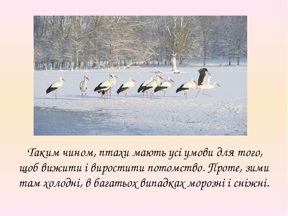 Таким чином, птахи мають усі умови для того, щоб вижити і виростити потомство...