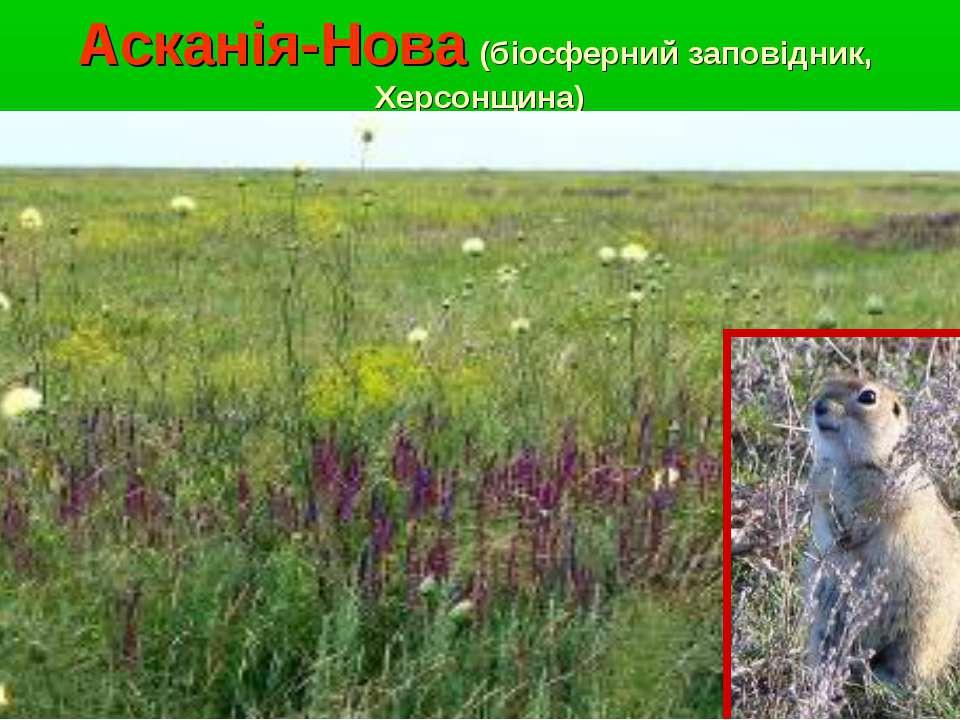 Асканія-Нова (біосферний заповідник, Херсонщина)