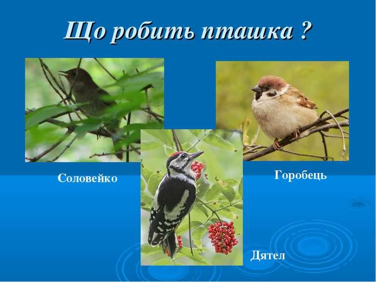Що робить пташка ? Соловейко Горобець Дятел