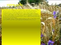 приклади. 1. Простежимо зміни, що відбуваються на полі (агроценоз), яке не об...