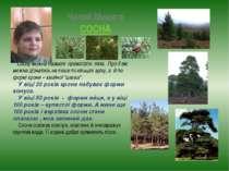 Чалий Микита СОСНА Сосну можна назвати праматір'ю лісів. Про її вік можна діз...