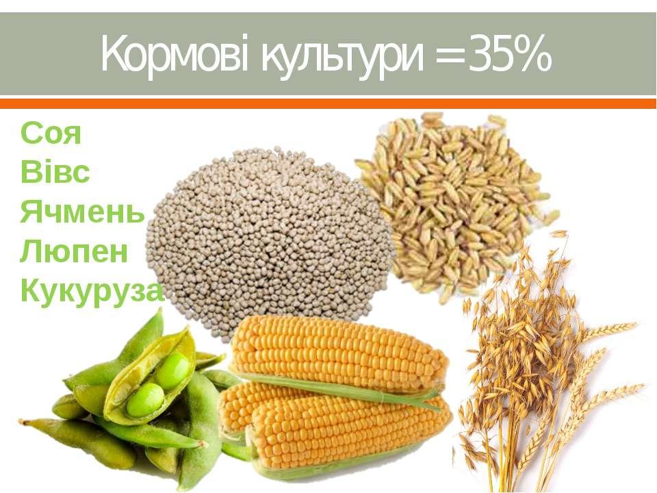 Кормові культури = 35%