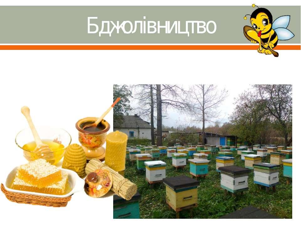 Бджолівництво