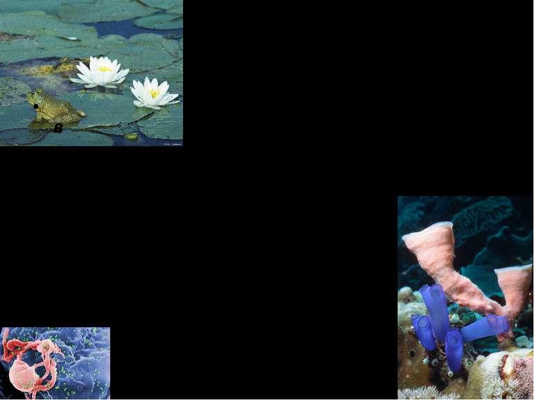 Основні принципи біології Біологія – наука про життя в усіх його проявах Обєк...