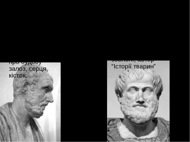 Погляд на живу природу філософів античності Гіппократ( 460-377р до н е ), зас...