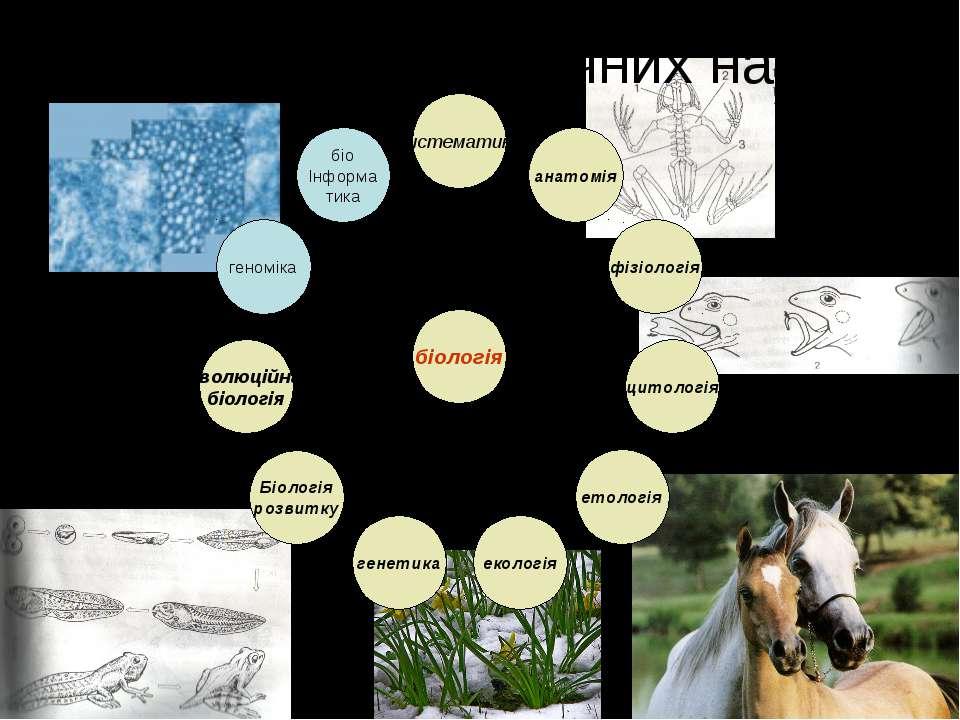 Система біологічних наук