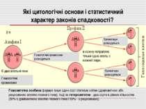 Які цитологічні основи і статистичний характер законів спадковості? 2 n Є два...