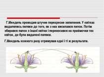 Г.Мендель проводив штучне перехресне запилення. У квітках видалялись пиляки д...