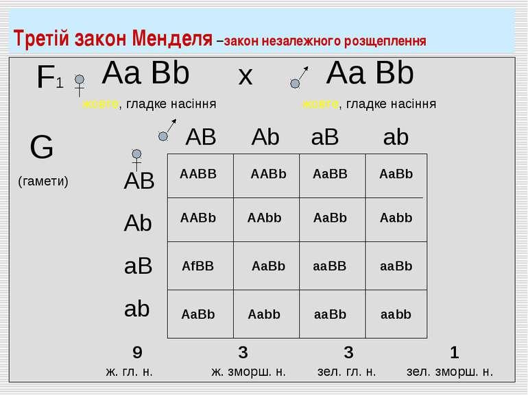 F1 Аа Bb жовте, гладке насіння Аа Bb жовте, гладке насіння х G (гамети) AB Ab...