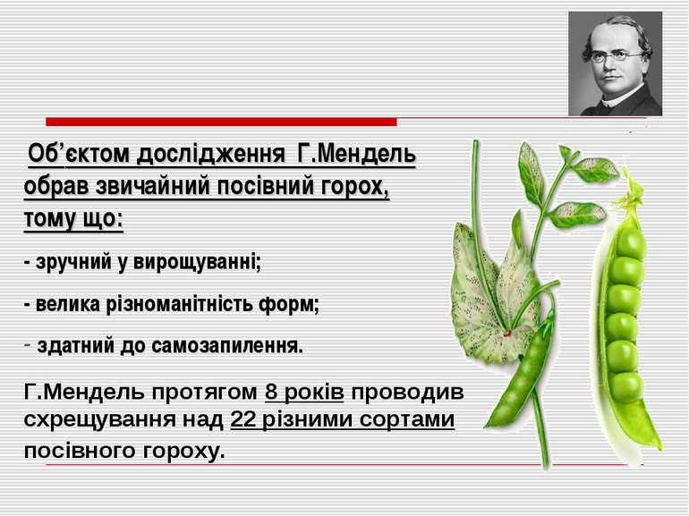 Об'єктом дослідження Г.Мендель обрав звичайний посівний горох, тому що: - зру...