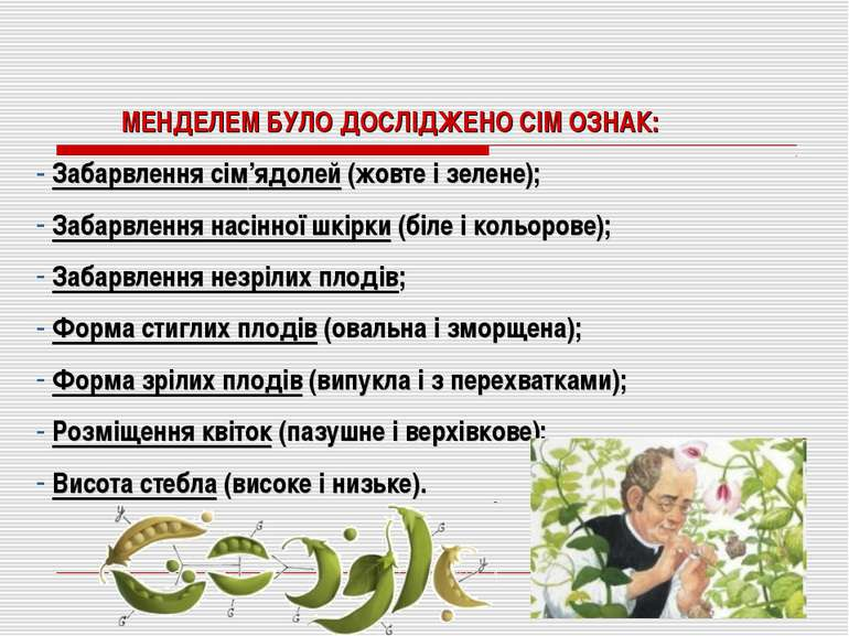 МЕНДЕЛЕМ БУЛО ДОСЛІДЖЕНО СІМ ОЗНАК: Забарвлення сім'ядолей (жовте і зелене); ...