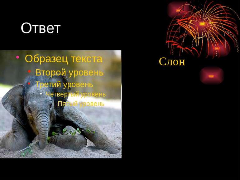 Ответ Слон