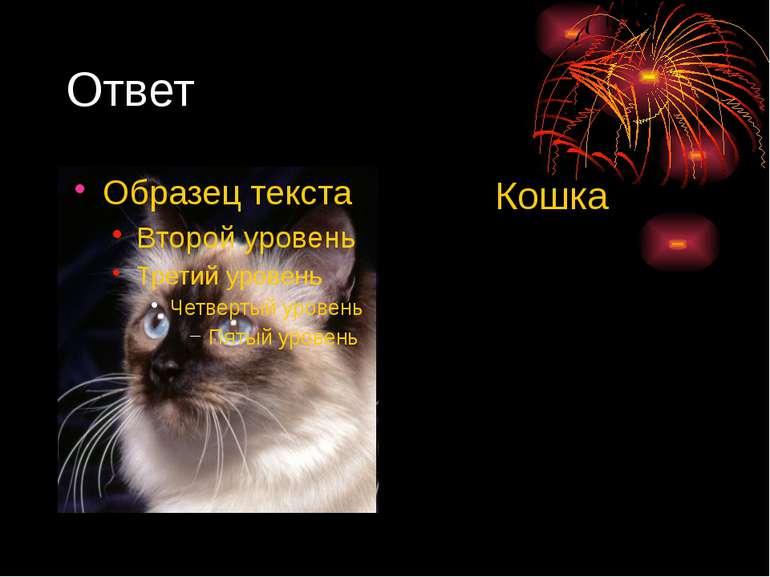 Ответ Кошка