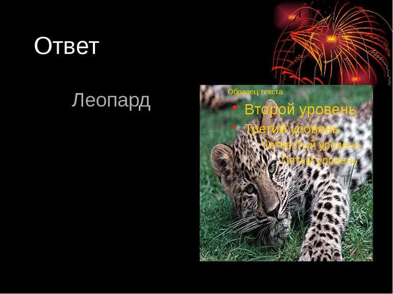 Ответ Леопард