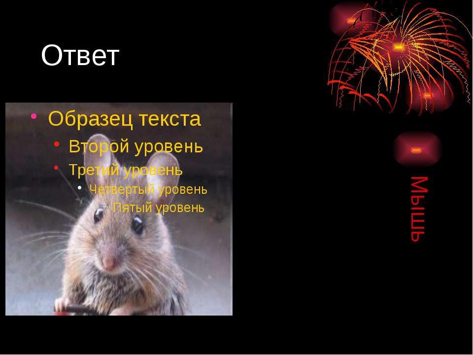 Ответ Мышь