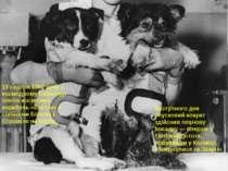 19 серпня 1960 року з космодрому Байконур злетів космічний корабель «Восток» ...