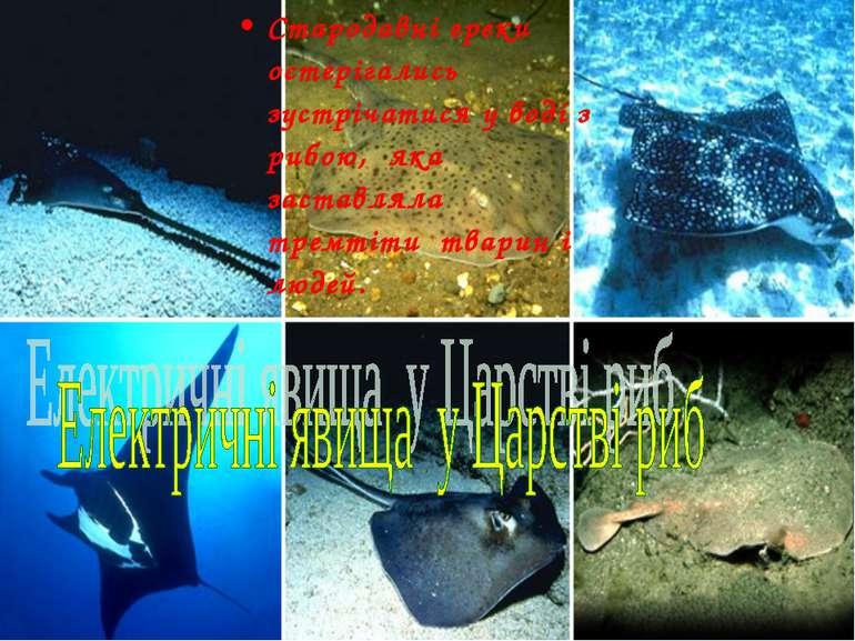 Стародавні греки остерігались зустрічатися у воді з рибою, яка заставляла тре...