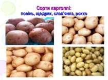 Сорти картоплі: повінь, щедрик, слов'янка, рокко
