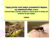 Серед рослин поля живуть різноманітні тварини, що живляться ними: комахи поль...