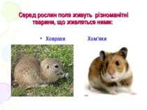 Серед рослин поля живуть різноманітні тварини, що живляться ними: Ховрахи Хом...