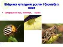 Шкідники культурних рослин і боротьба з ними Колорадський жук, попелиця, сарана