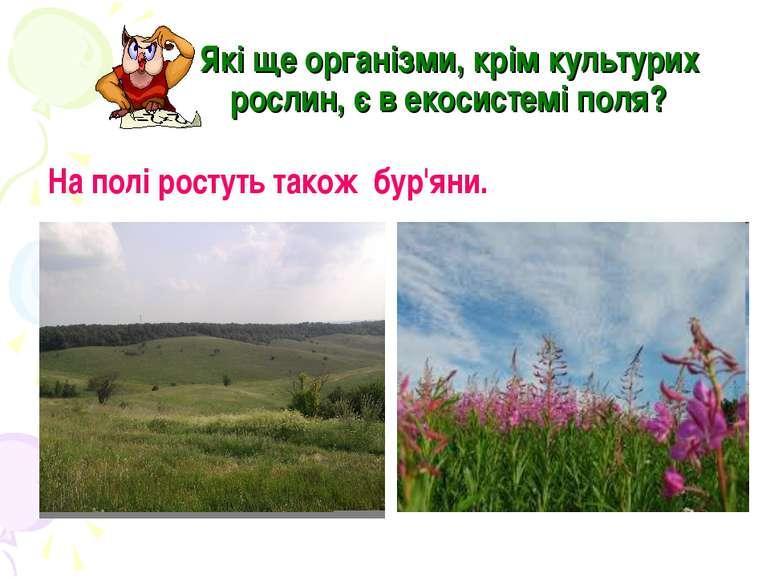 Які ще організми, крім культурих рослин, є в екосистемі поля? На полі ростуть...
