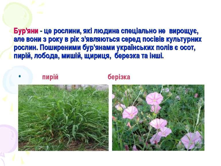 Бур'яни - це рослини, які людина спеціально не вирощує, але вони з року в рік...