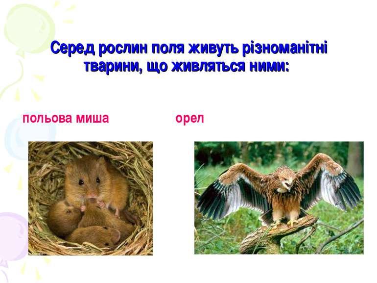 Серед рослин поля живуть різноманітні тварини, що живляться ними: польова миш...