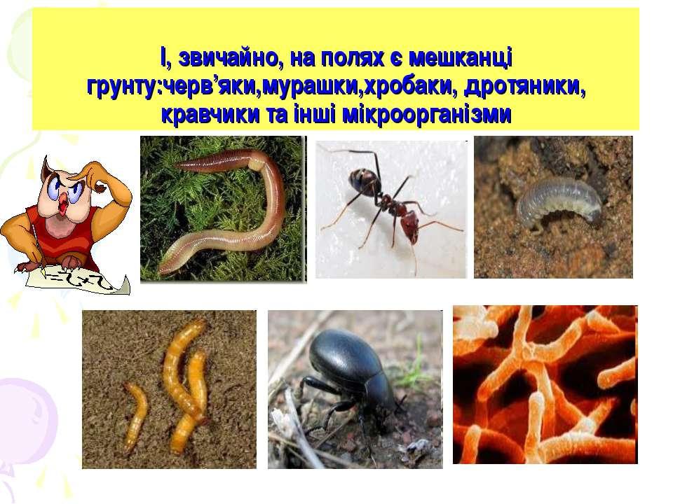 І, звичайно, на полях є мешканці грунту:черв'яки,мурашки,хробаки, дротяники, ...