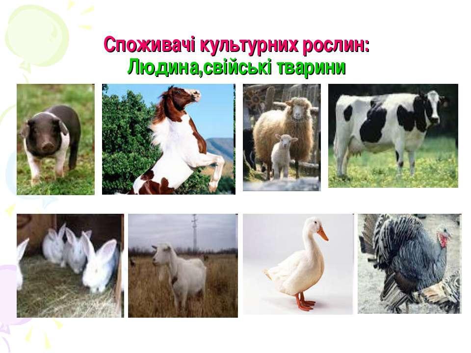 Споживачі культурних рослин: Людина,свійські тварини