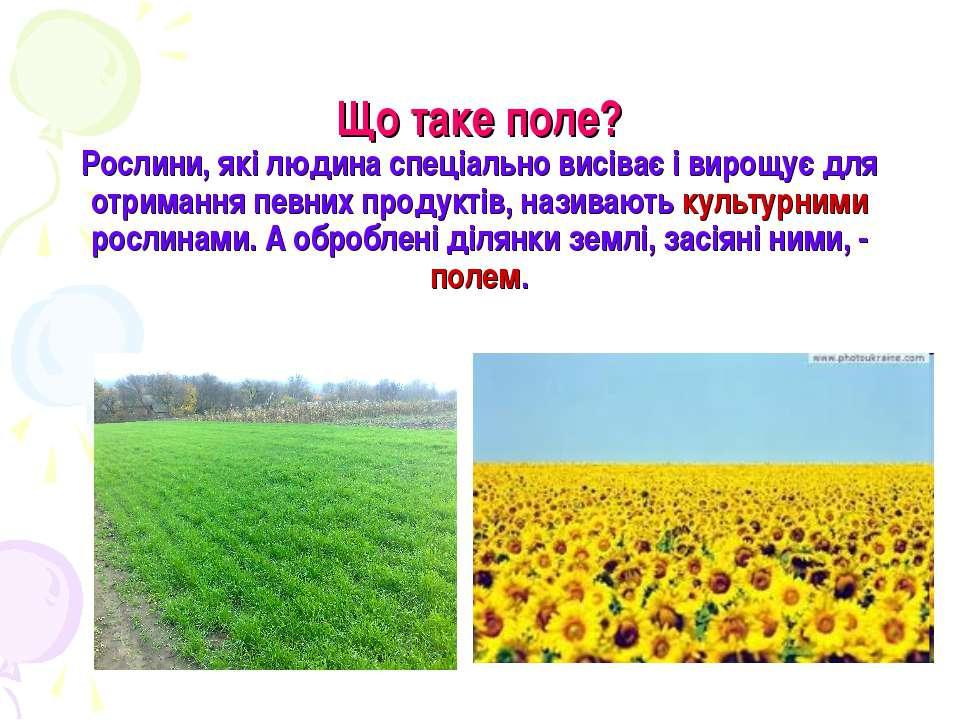 Що таке поле? Рослини, які людина спеціально висіває і вирощує для отримання ...