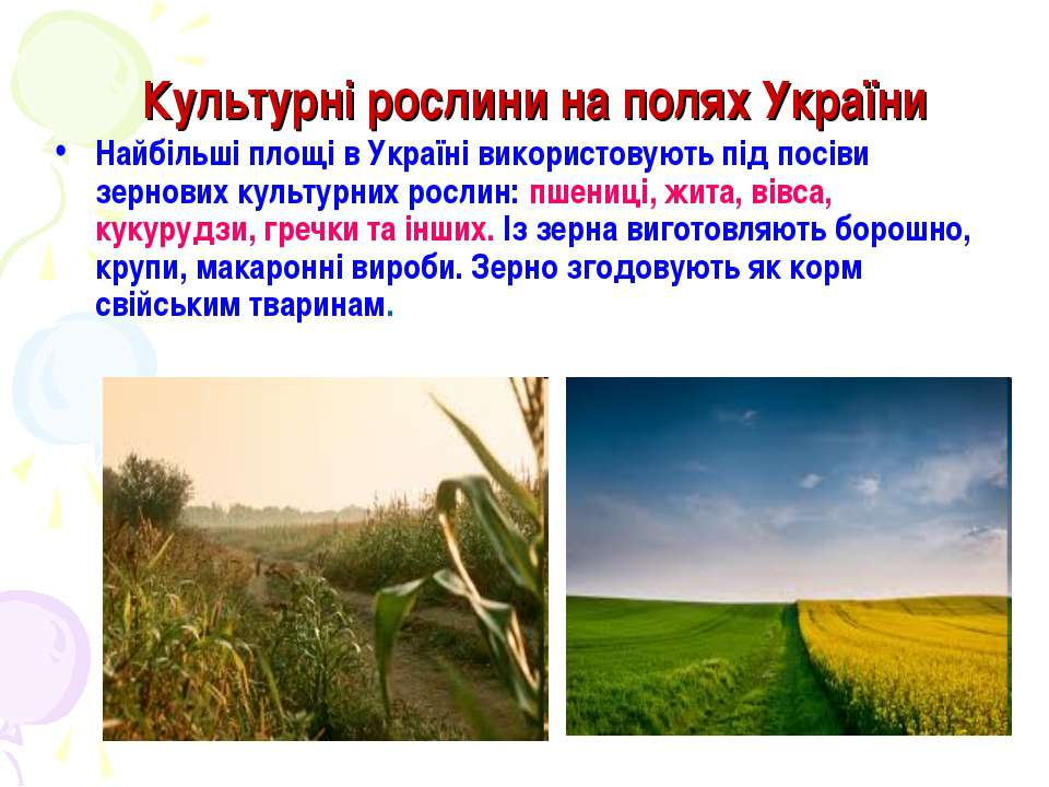 Культурні рослини на полях України Найбільші площі в Україні використовують п...