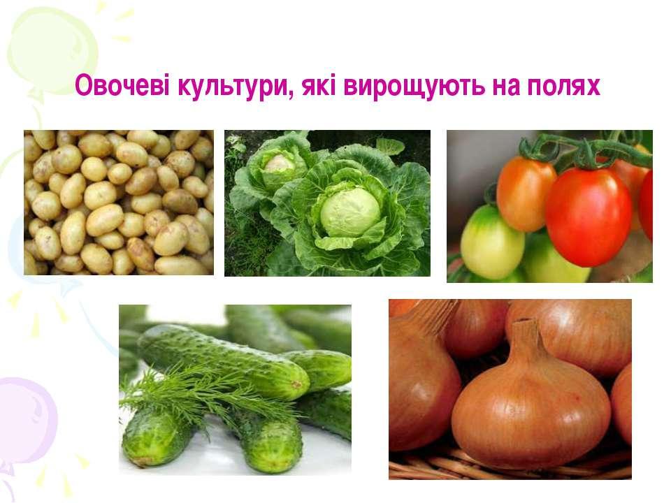 Овочеві культури, які вирощують на полях