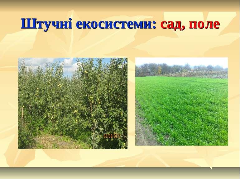 Штучні екосистеми: сад, поле