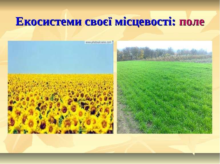 Екосистеми своєї місцевості: поле