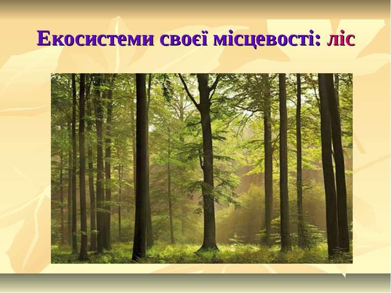Екосистеми своєї місцевості: ліс