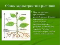 Общая характеристика растений Царство растения представлено разнообразными фо...