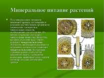 Минеральное питание растений Под минеральным питанием понимают процесс поглощ...