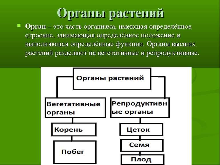 Органы растений Орган – это часть организма, имеющая определённое строение, з...