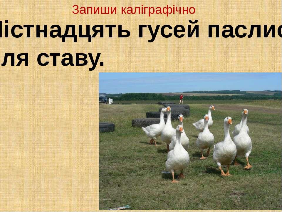 Шістнадцять гусей паслися біля ставу. Запиши каліграфічно