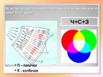 Які колбочки посилають сигнал в мозок, коли ми бачимо жовтий колір? білий кол...