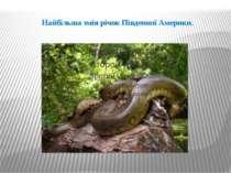 Найбільша змія річок Південної Америки.