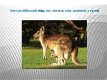 Австралійський звір, що носить своє дитинча у сумці