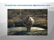 Великий звір з рогом,мешканець африканських саван